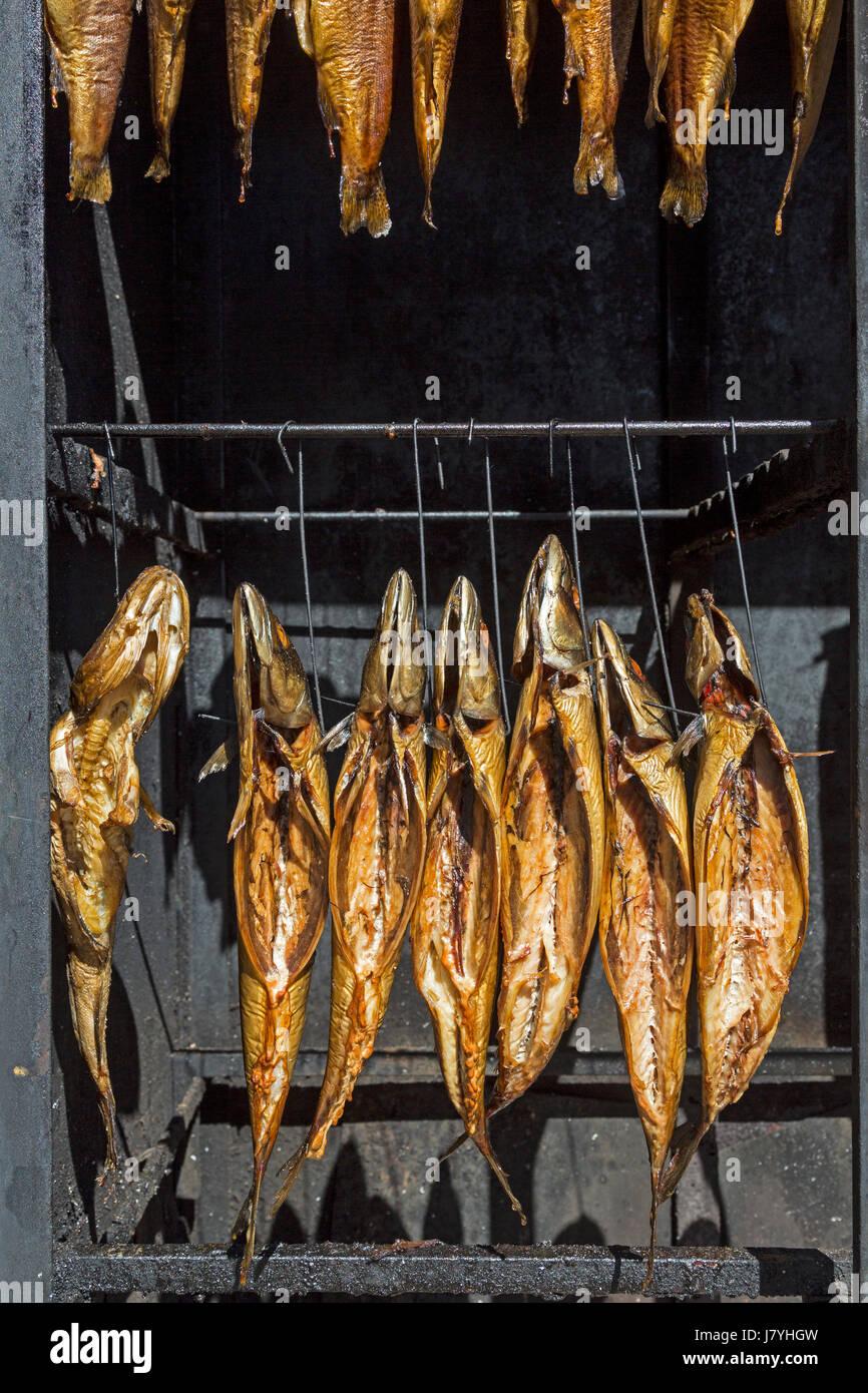 Geräucherte Fische in einem Räucherofen, Boltenhagen, Mecklenburg-Vorpommern, Deutschland / Smoked fishes in a stove, Stock Photo