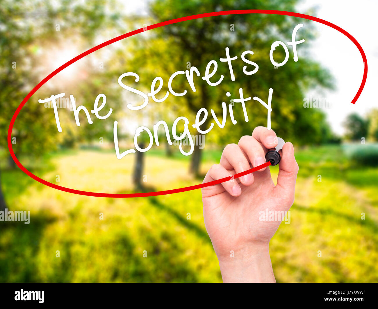 Man Hand writing The Secrets of Longevity with black marker on visual screen. Isolated on nature. Business, technology, - Stock Image