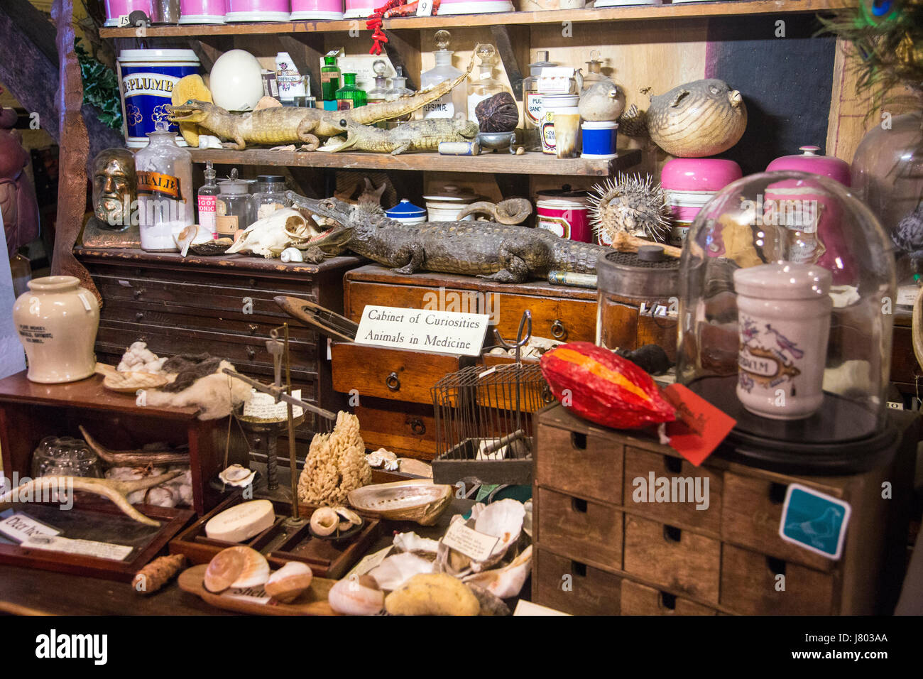 Traditional victorian apothecary's, cabinet of curiosities (Old Operating Theatre Museum and Herb Garret, London, - Stock Image