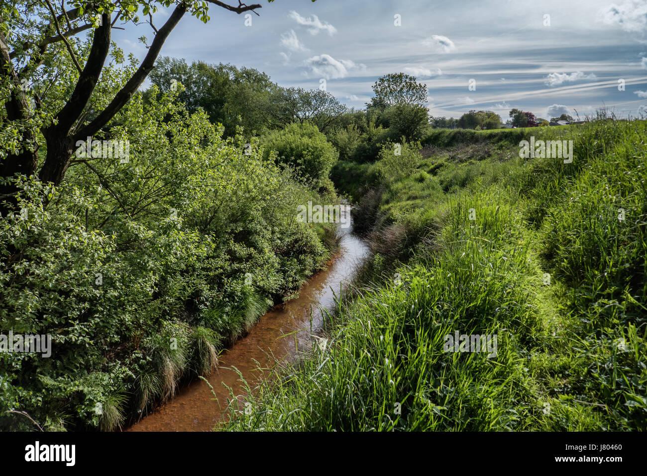 Ochre brook in wild nature, Vester Nebel, Jutland Denmark - Stock Image