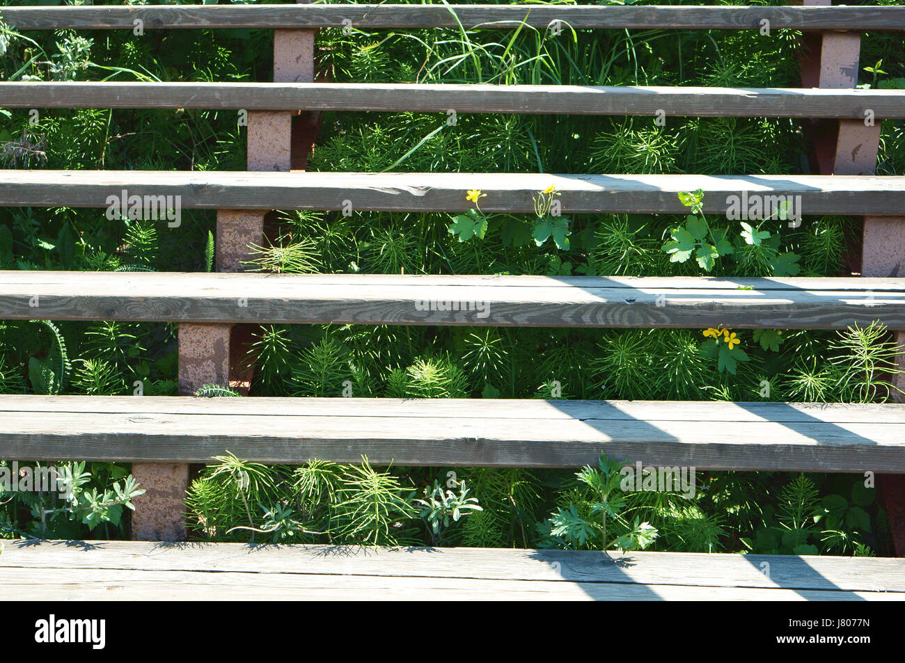 The stairs on the street have grown grass, and the plants are growing between stairs. - Stock Image