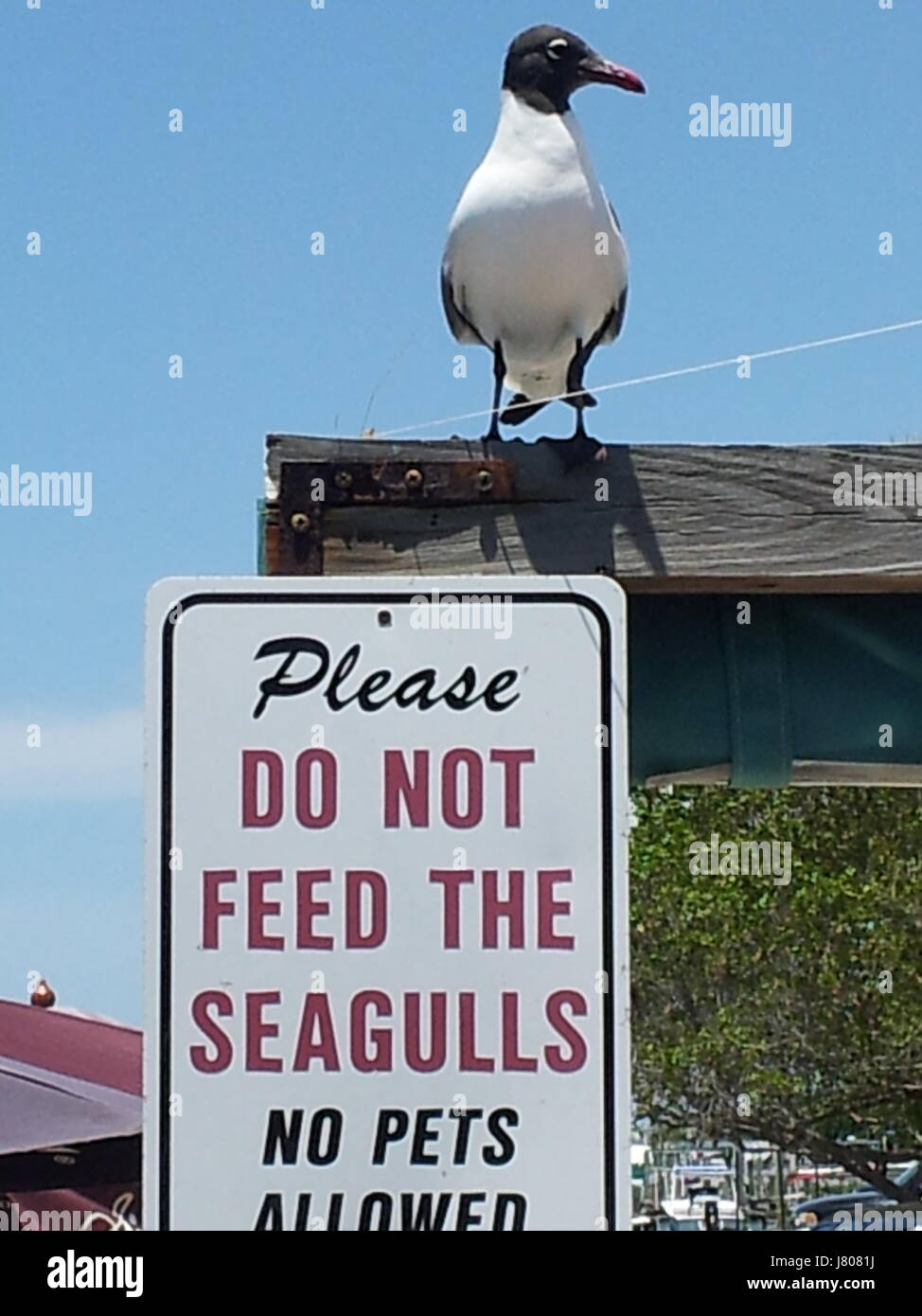 Do Not Feed The Seagulls Stock Photo