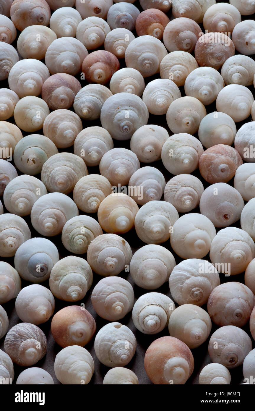 Natural variation of seashells - Stock Image