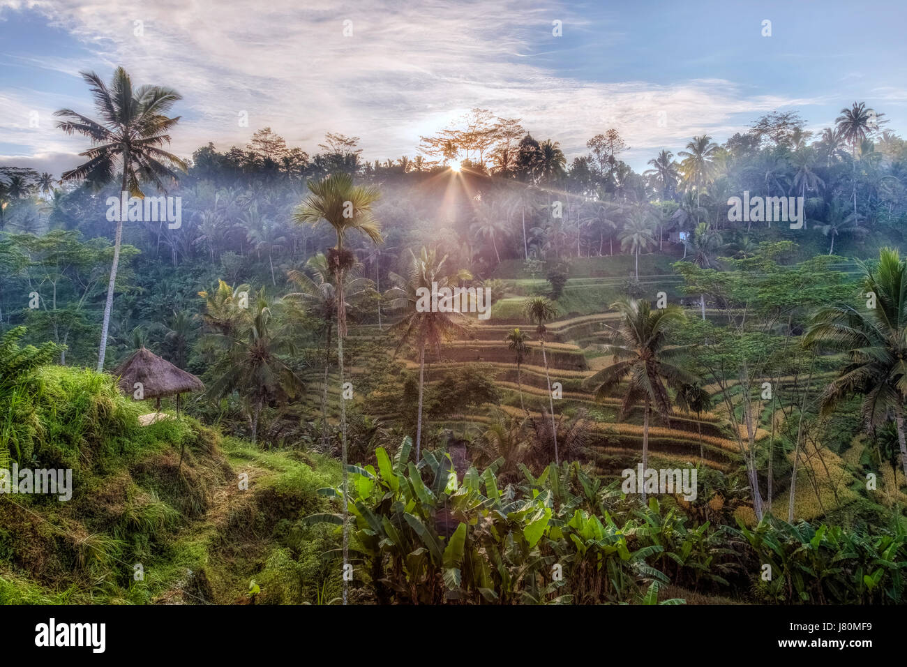 Tegalalang, Rice Fields, Ubud, Bali, Indonesia, Asia - Stock Image