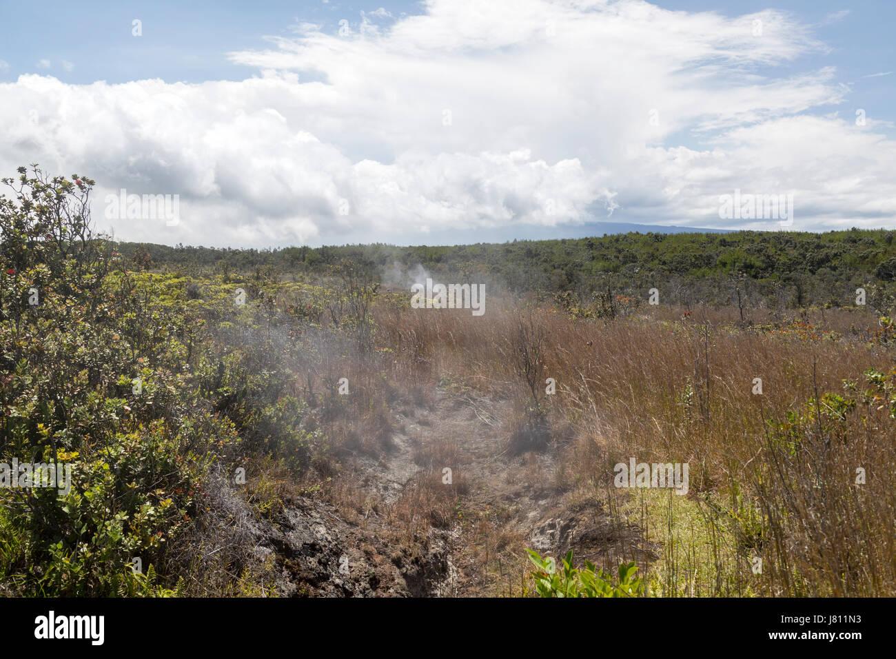Steam vent fields in Volcanoes National Park - Stock Image