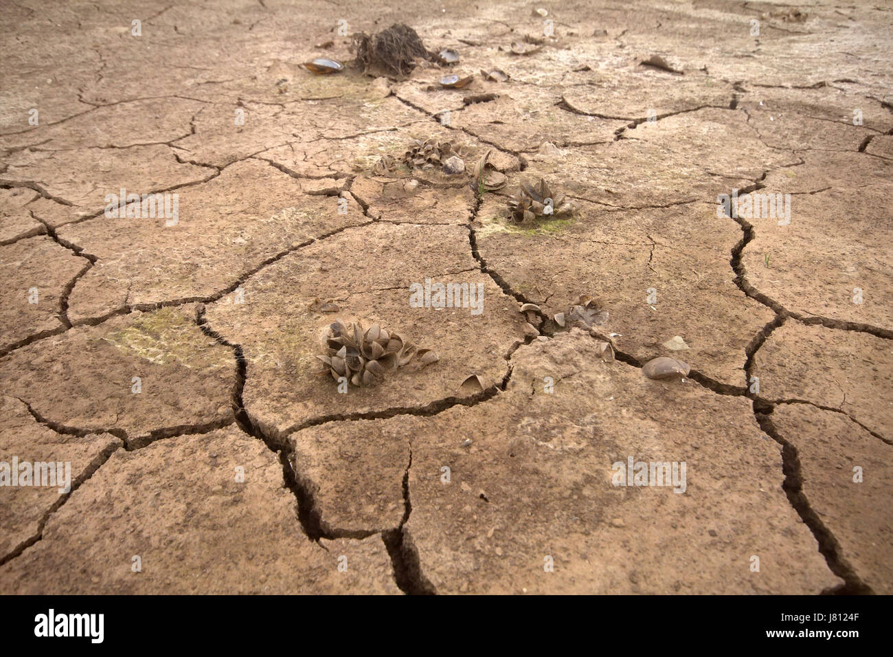 The bottom of dried-up pond with picturesquely broken mud. On surface - small plants - Stock Image