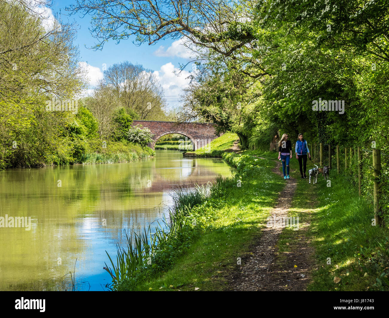 Two friends walking their dogs along the Kennet and Avon Canal near Little Bedwyn in Wiltshire. - Stock Image