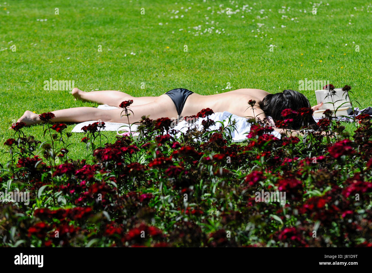 London, UK. 26th May, 2017. A sunbather in Whitehall Garden enjoys the hot weather and bright sunshine. Credit: - Stock Image