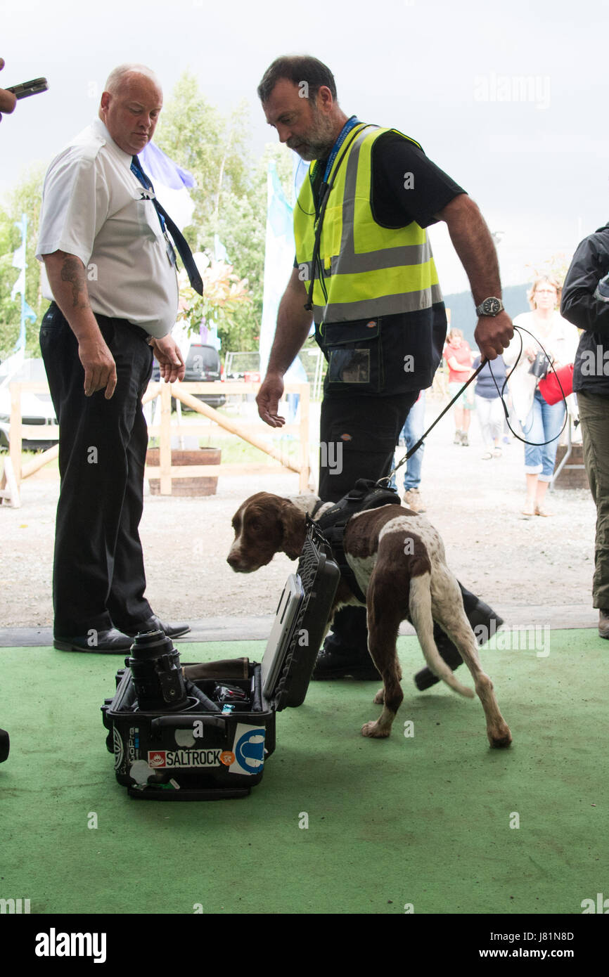 Hay on Wye, Wales UK, Saturday 27 May 2017 Hay Festival 2017 - Hightened security at the Hay Festival 2017 - a sniffer - Stock Image