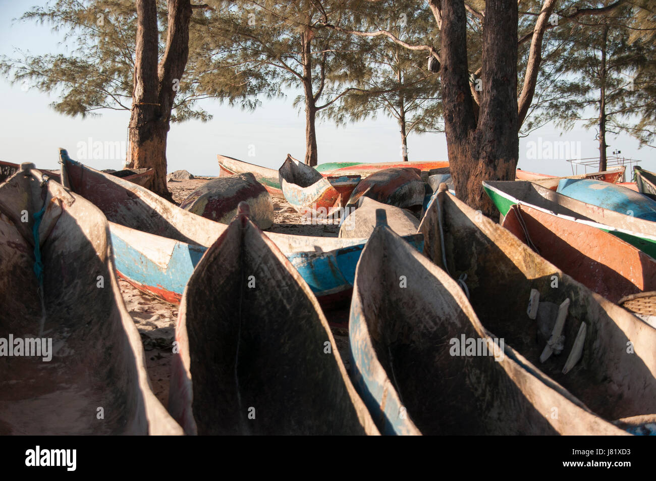 Beached canoes rest under a few Casuarina trees on a late autumn afternoon, Nacala Mozambique. - Stock Image