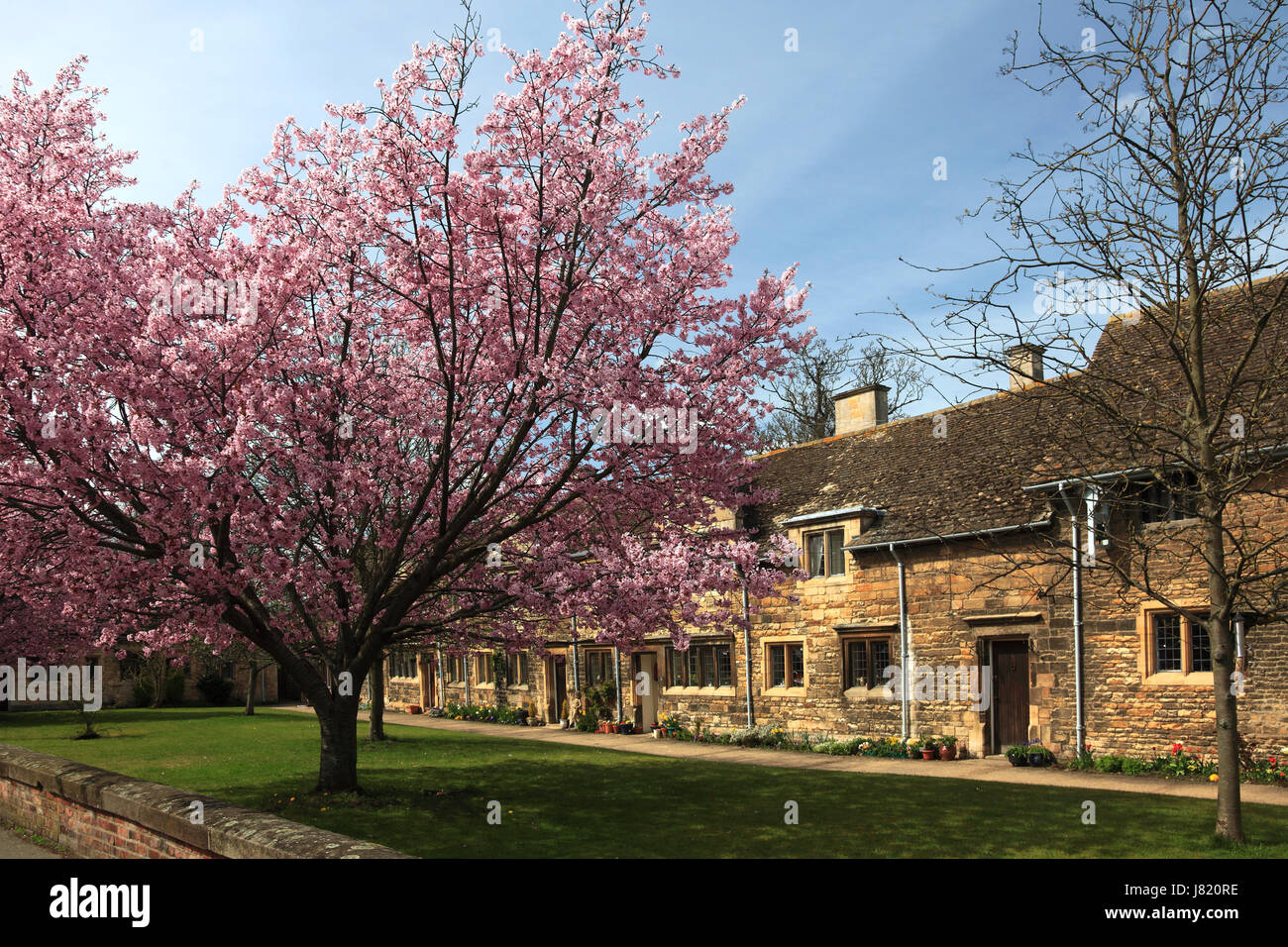 Spring Cherry Trees, Lord Burghleys Hospital Almshouses, Stamford Town, Lincolnshire England Britain UK - Stock Image