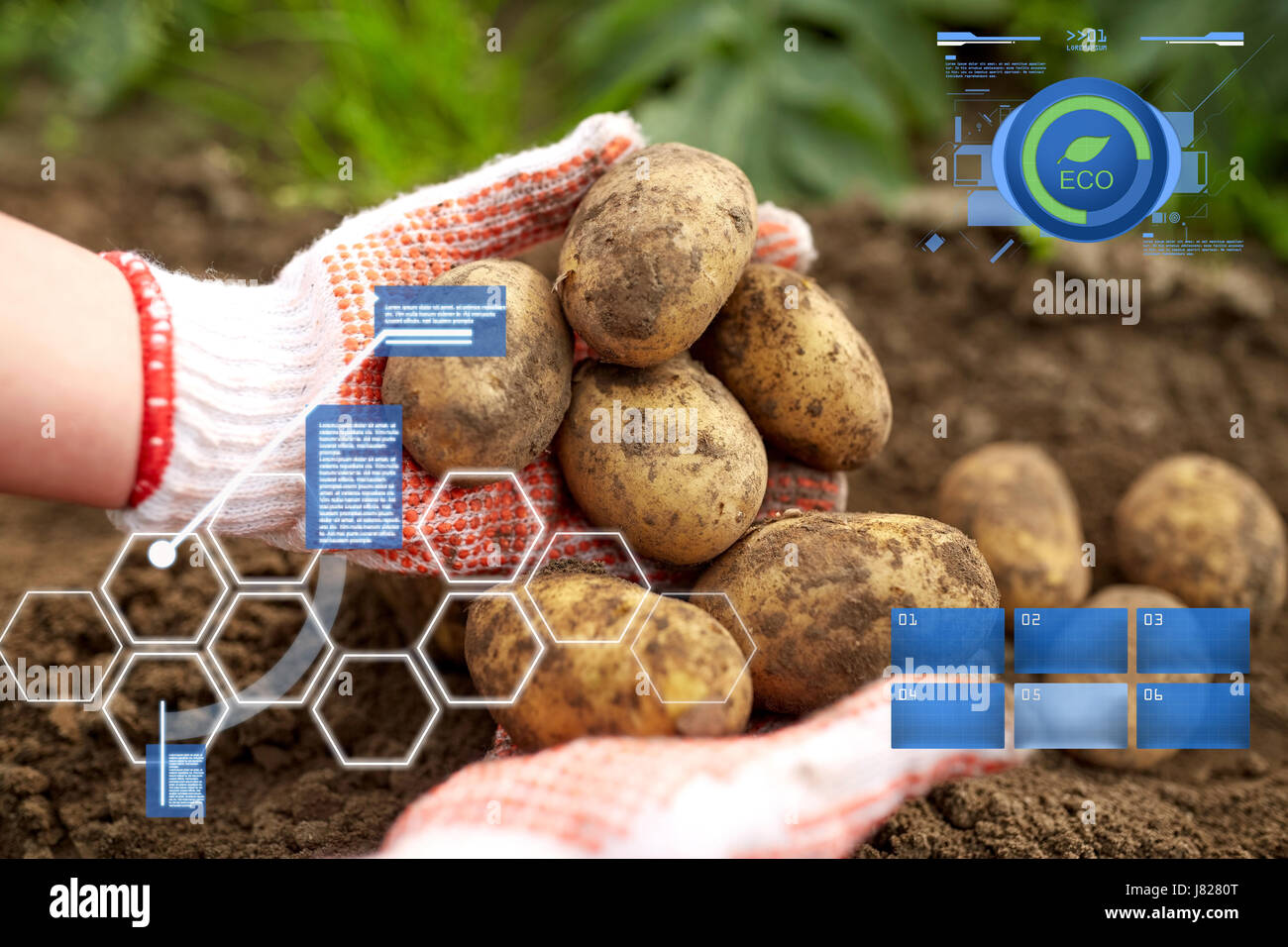 farmer with potatoes at farm garden Stock Photo: 142650392 - Alamy