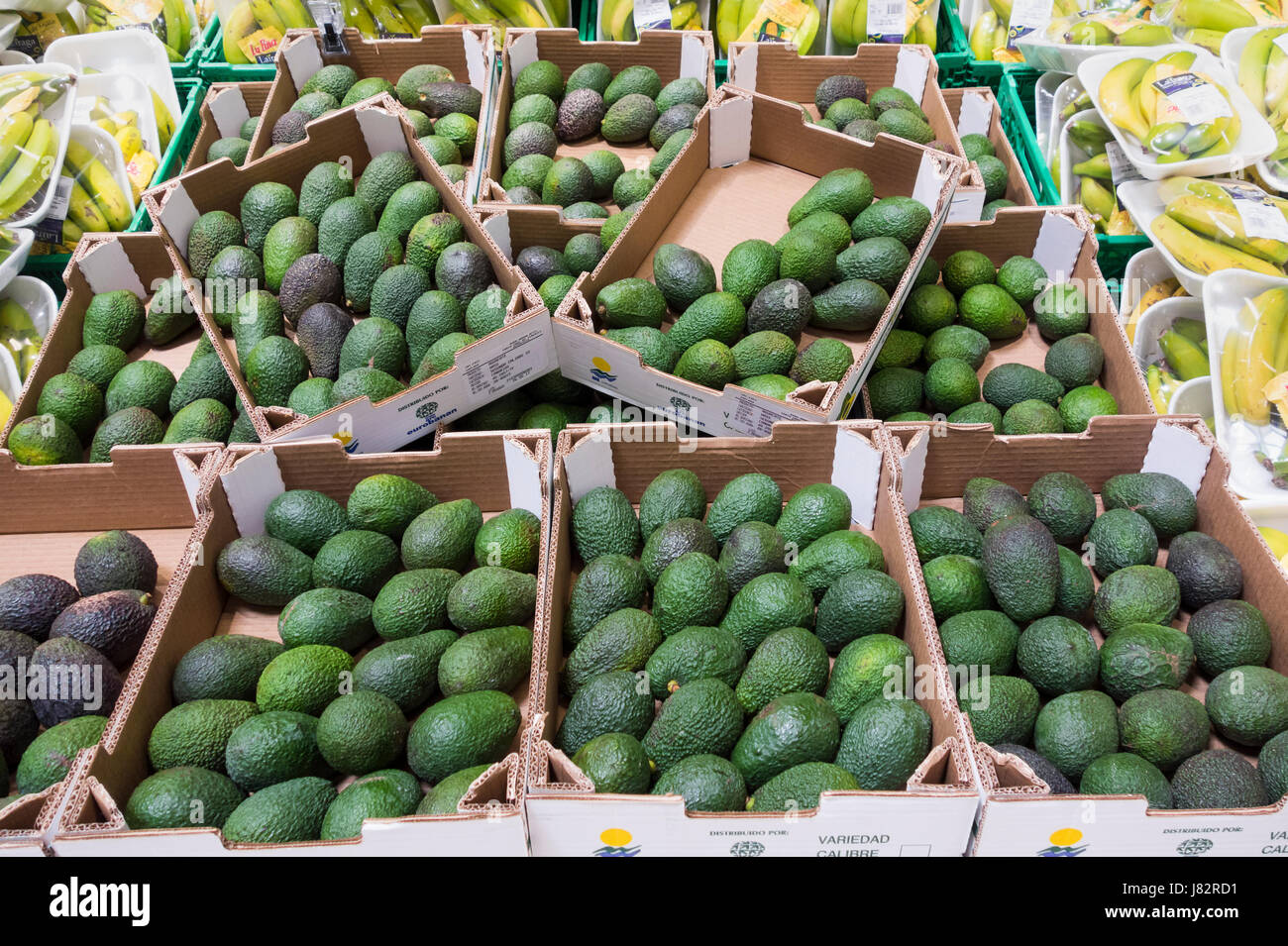 Avocados in supermarket on Gran Canaria. Locally grown. - Stock Image