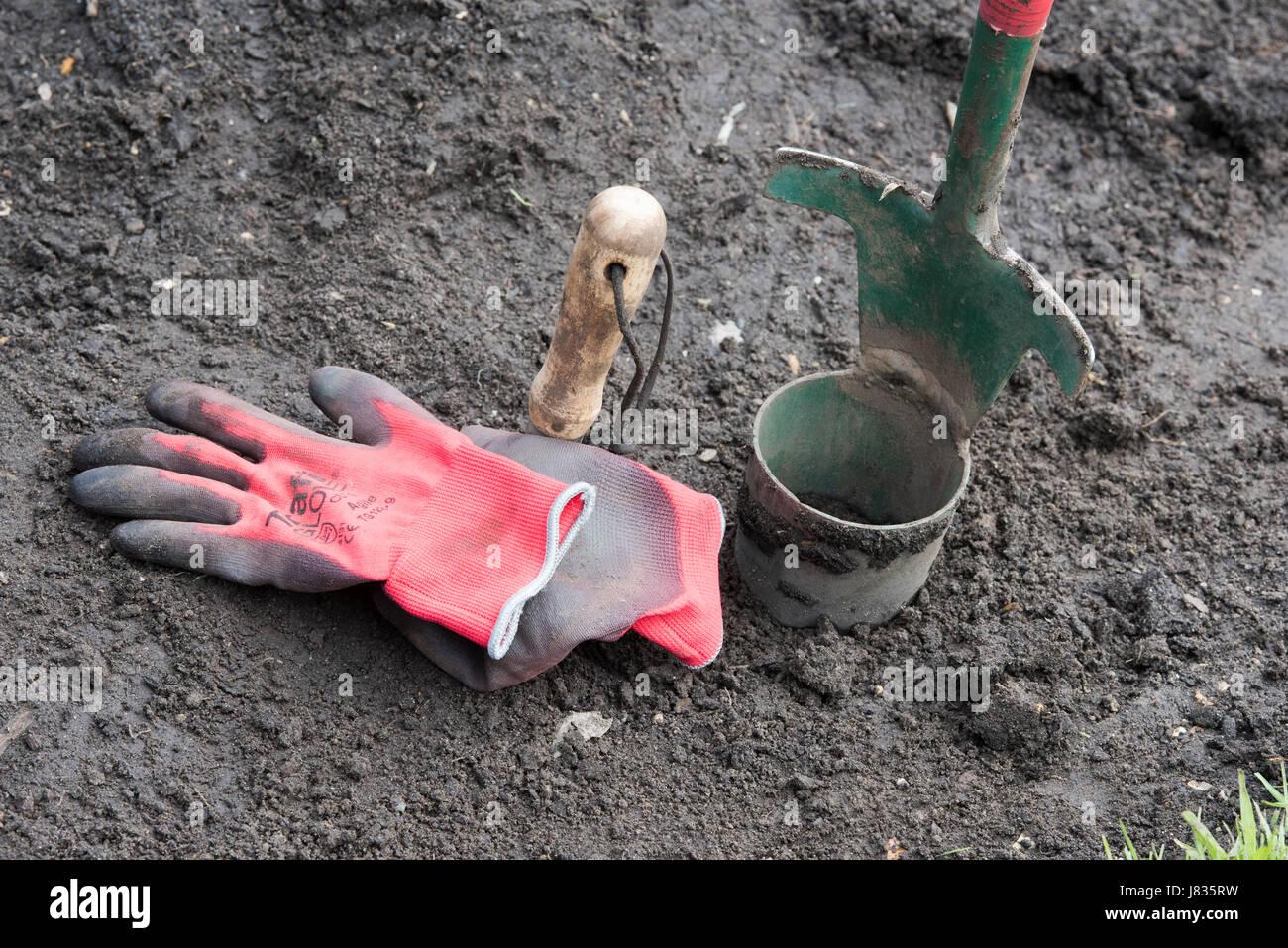 Bulb planter and garden gloves in a garden border. UK - Stock Image