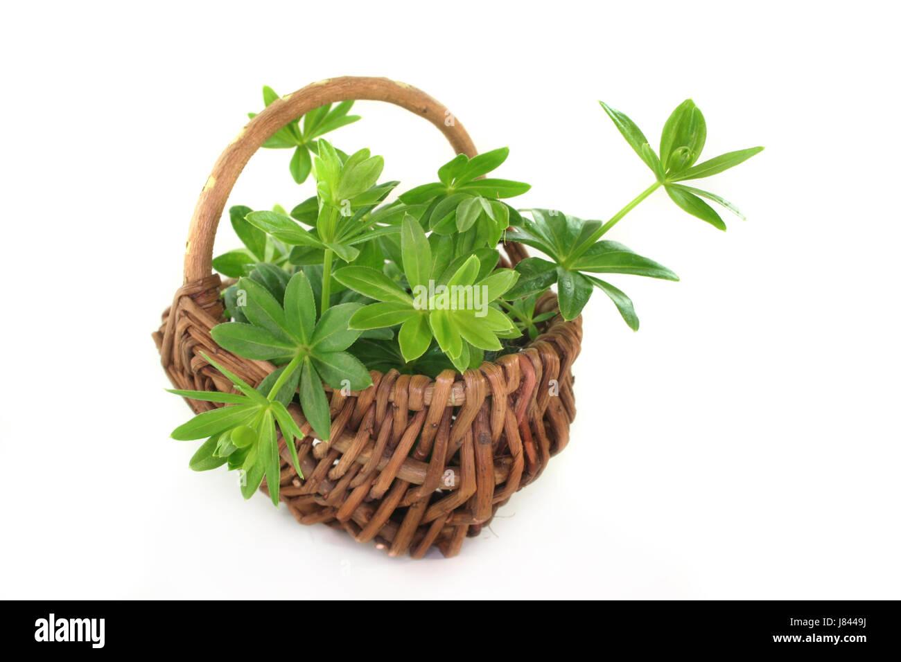 flavour taste woodruff herbs spice green alcohol spring flavour taste spring Stock Photo
