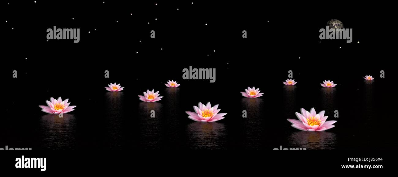 Flower Plant Night Nighttime Flowers Lily Illustration Peace Lotus