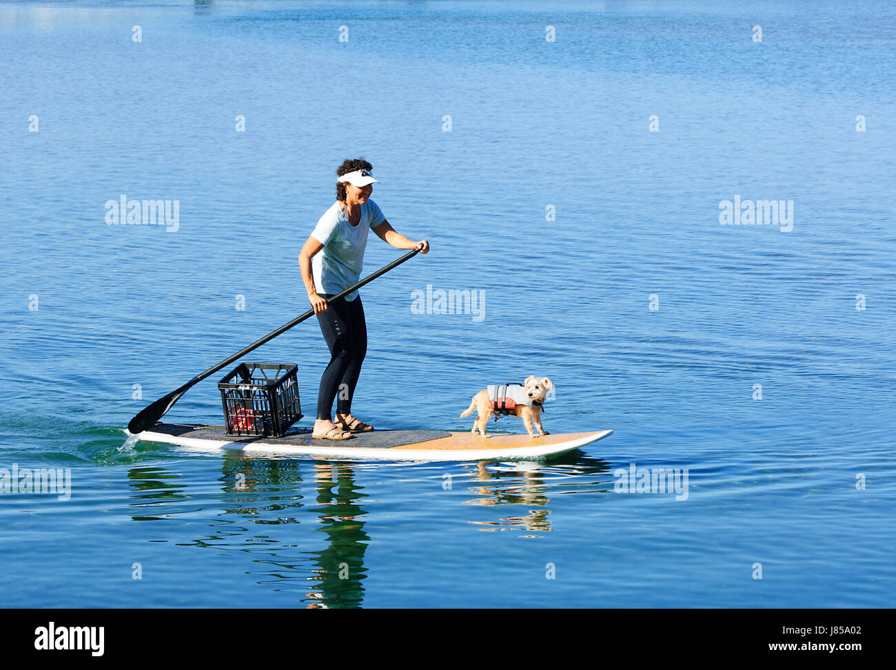 Young woman and a white dog wearing a lifejacket on a stand up paddleboard - Stock Image