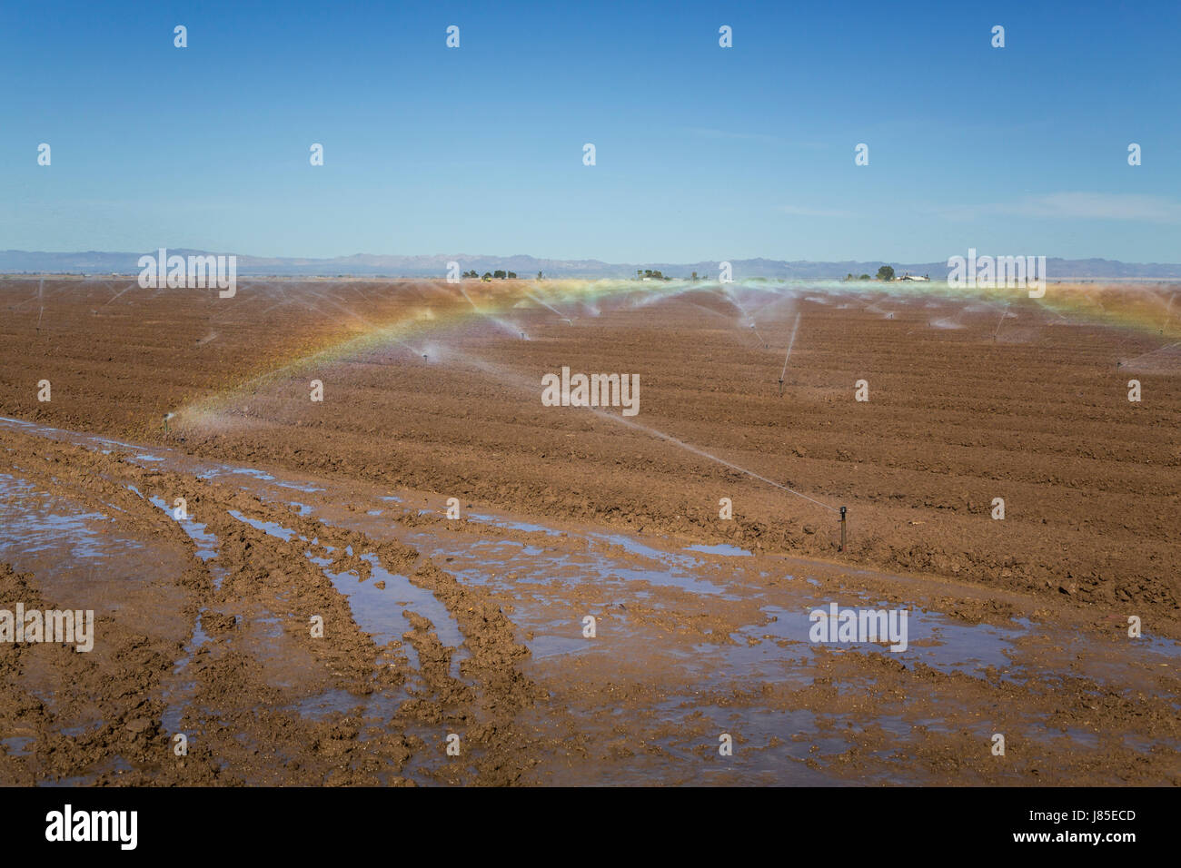 Field irrigation in the Imperial Valley of California, USA. - Stock Image