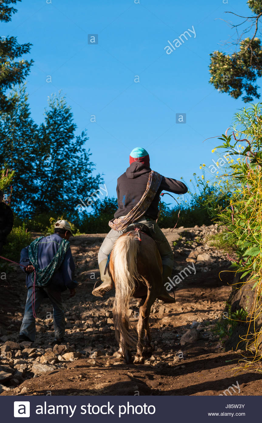 Tourist ride a house at Mount Bromo volcanoes, East Java, Indonesia. - Stock Image