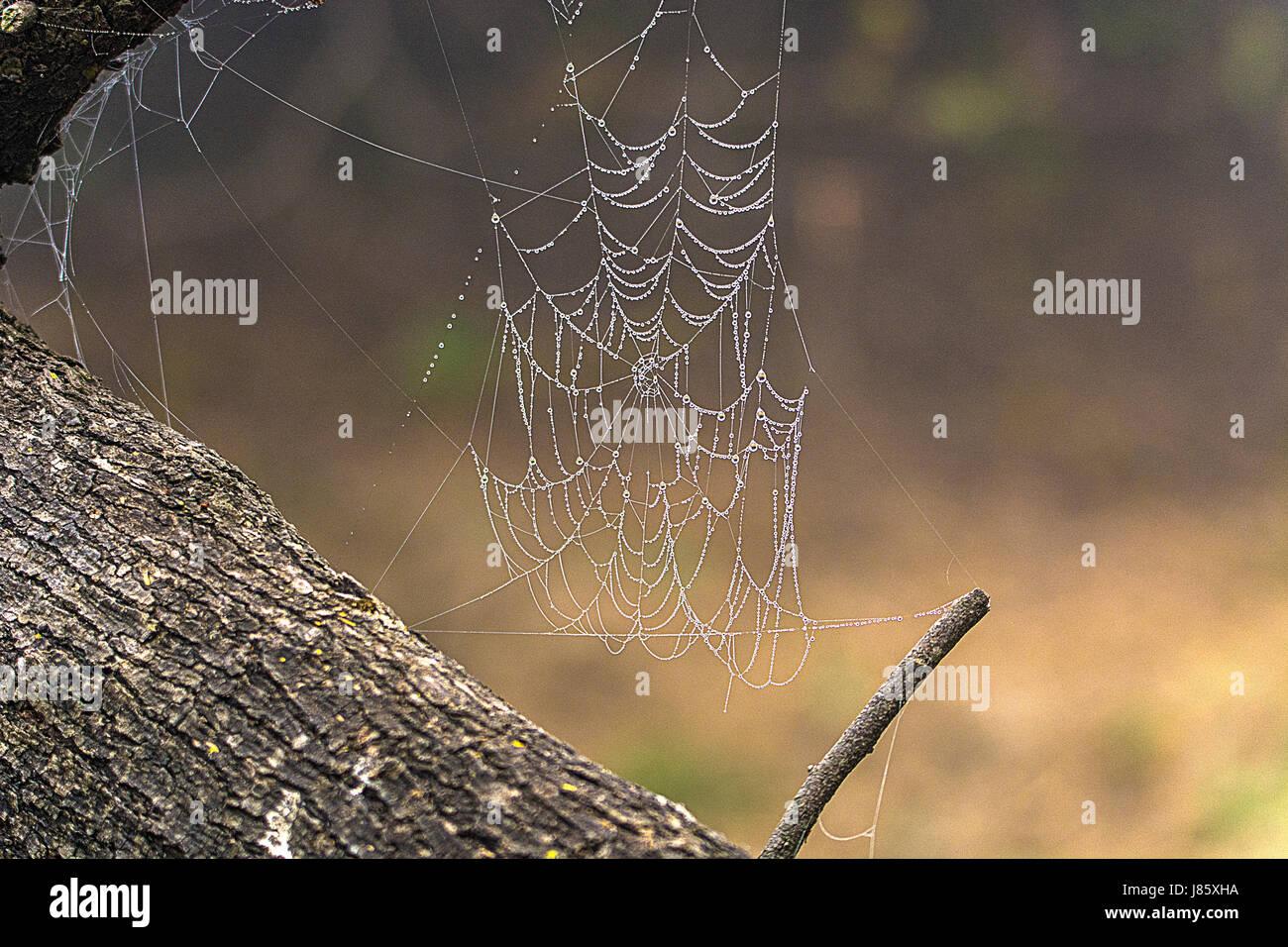 Spider Web - Stock Image