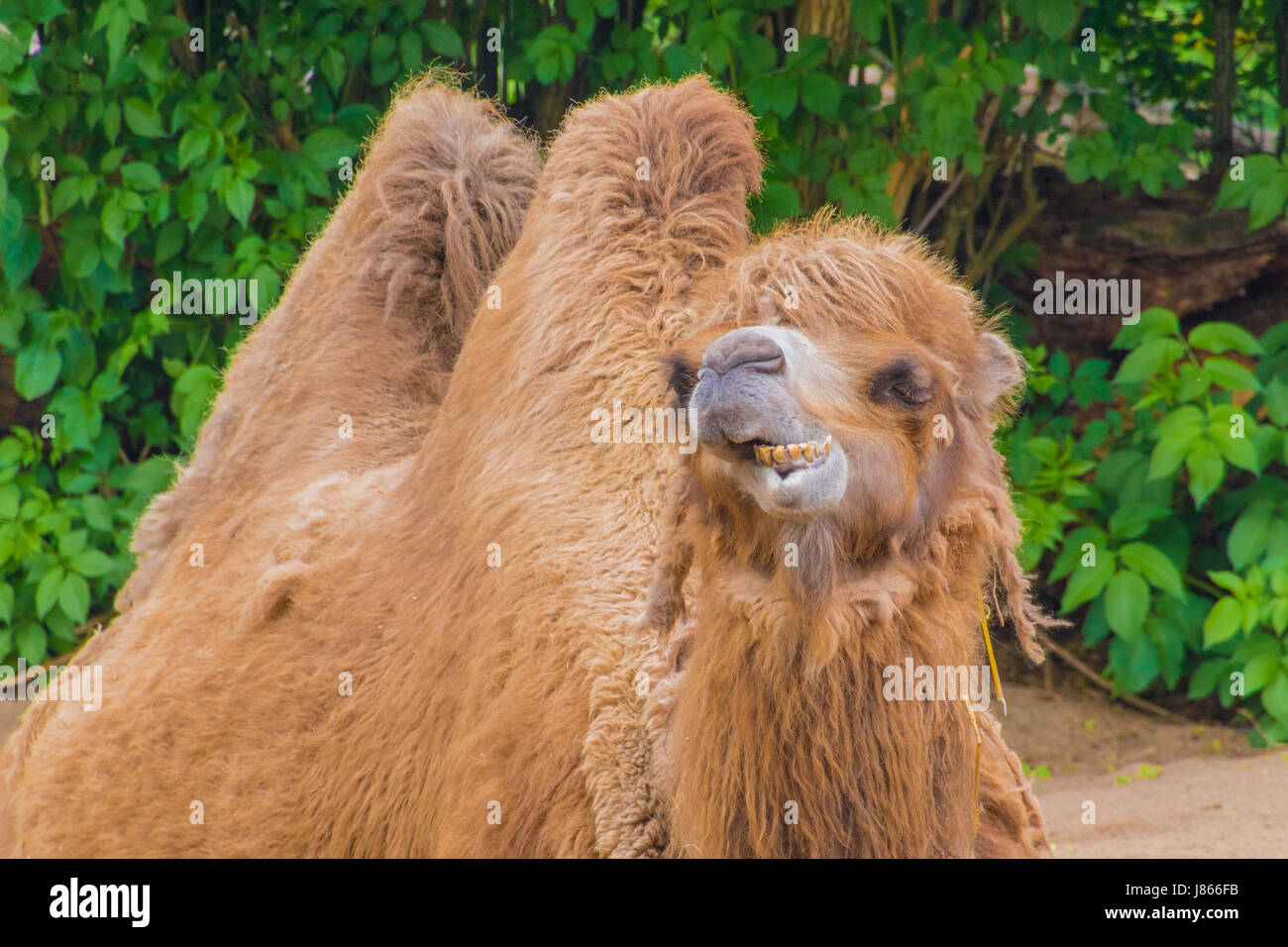 Camel Logo Stock Photos Amp Camel Logo Stock Images Alamy