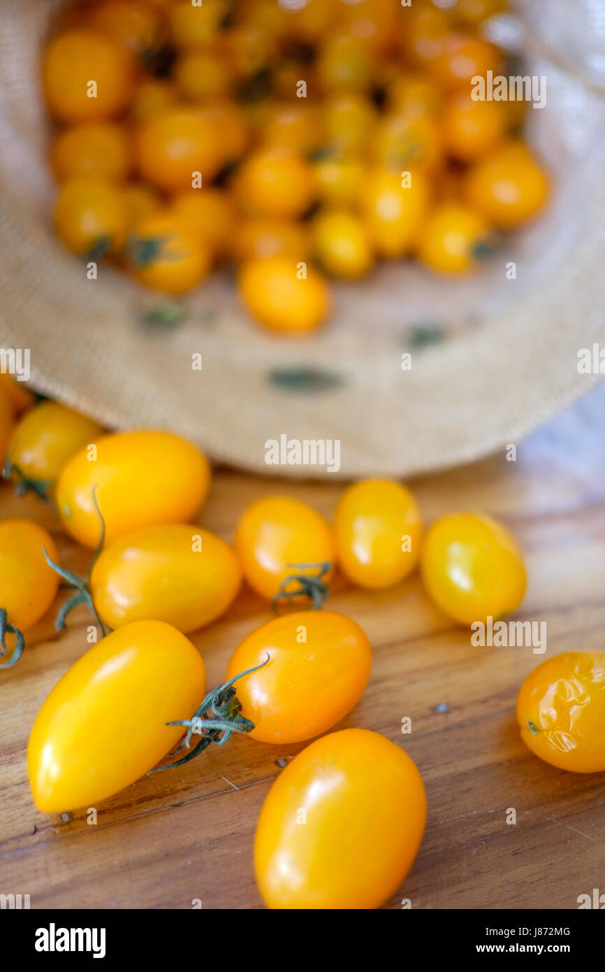 Pile of Juicy Yellow Holland Cherry Tomatoes drop out from weave basket on wooden table - Stock Image