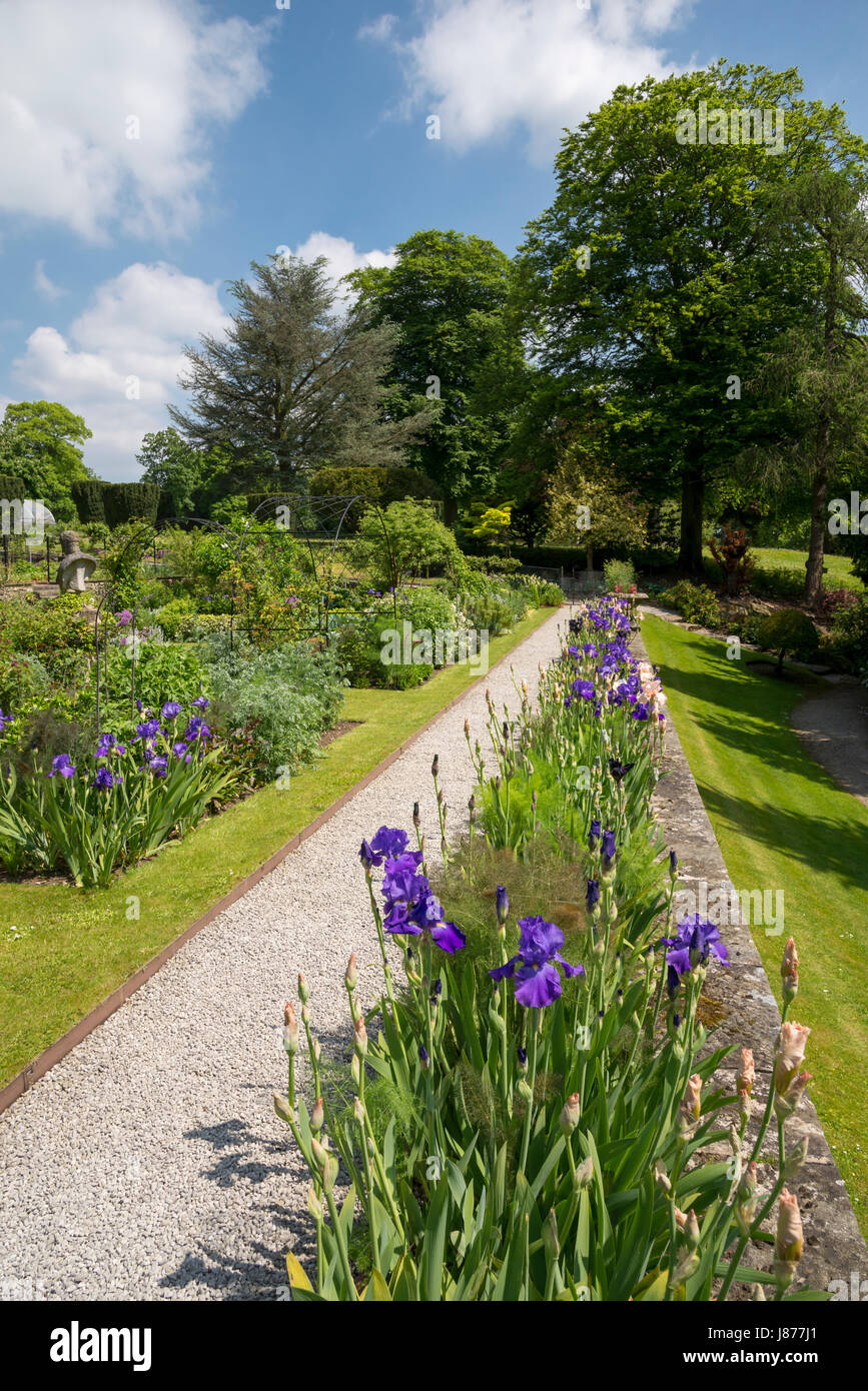 Border of Iris on the scented terrace at Thornbridge hall gardens near Great Longstone, Derbyshire, England. Stock Photo