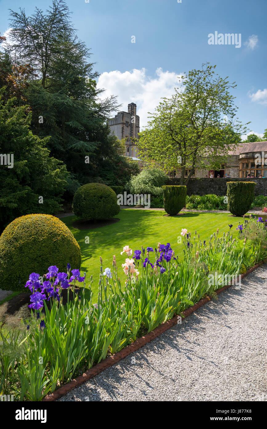 Flowering bearded Iris on the scented terrace at Thornbridge hall gardens near Great Longstone, Derbyshire, England. Stock Photo