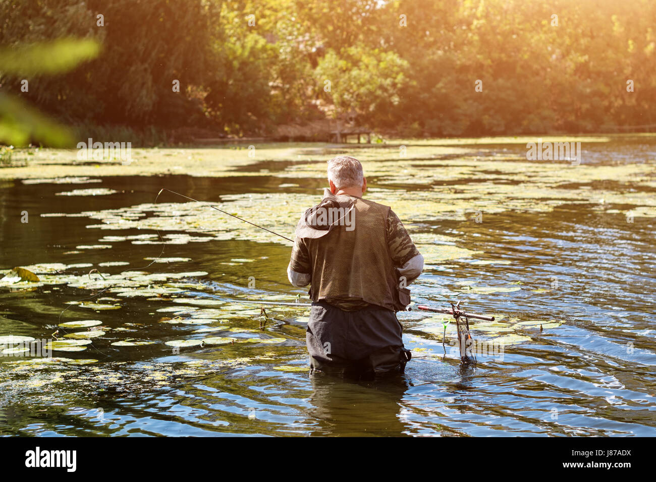 Old fisherman fishing in a lake or river with a fishing rod on a sunny day.  Man standing in the water Stock Photo - Alamy