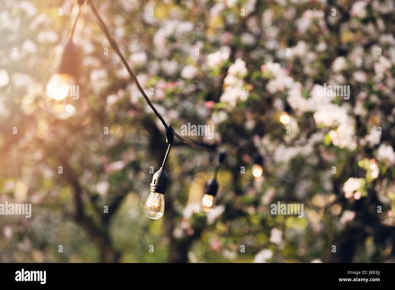outdoor party string lights hanging in backyard garden Stock Photo