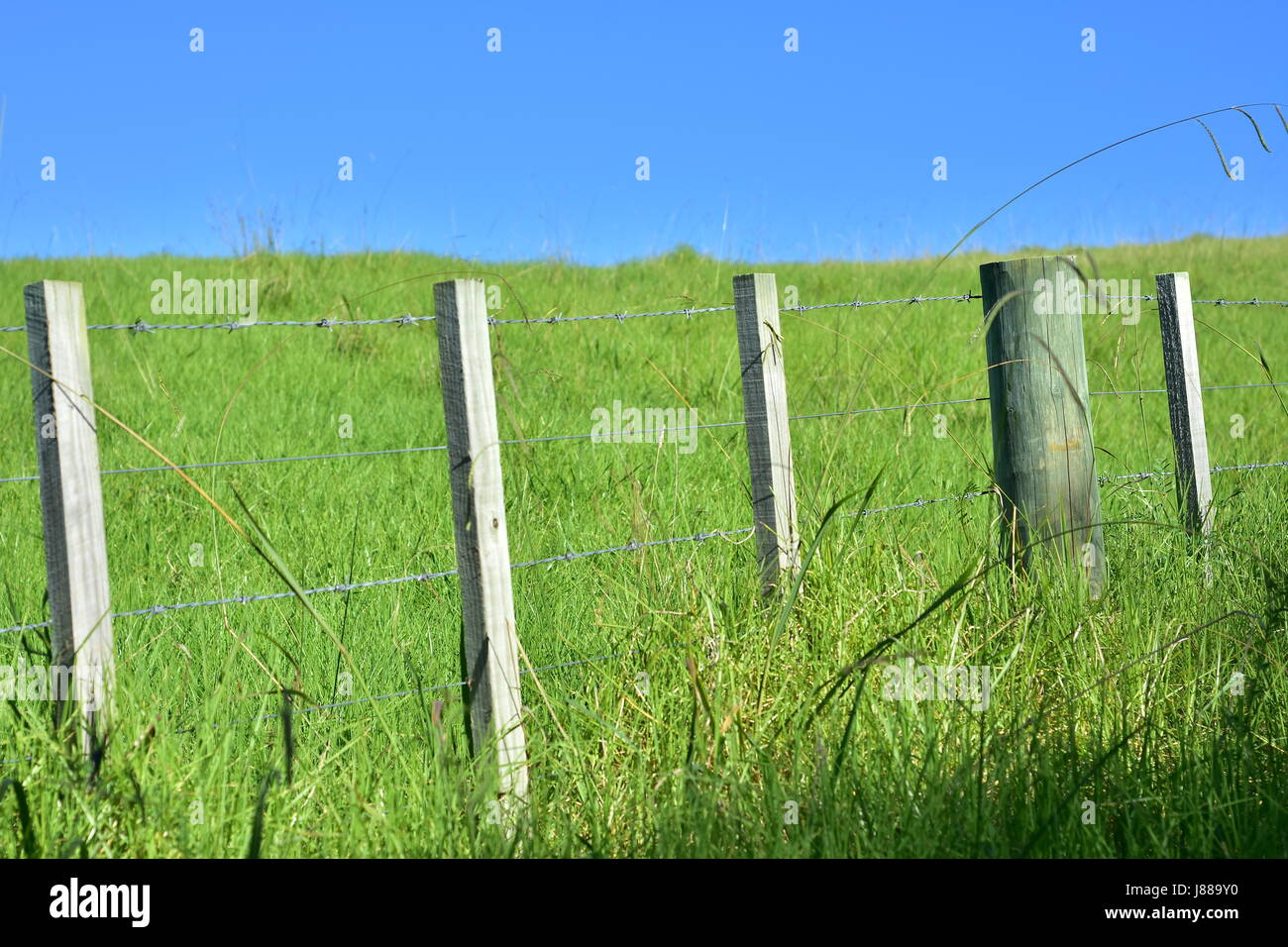 Fence from barbed steel wire between wooden poles dividing green pasture on sunny day with blue sky. - Stock Image