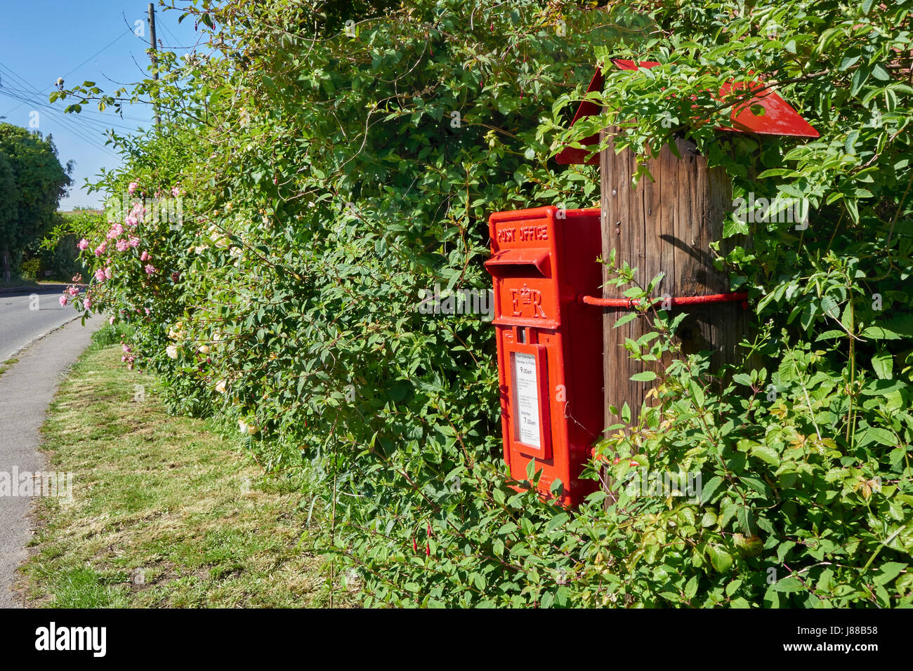 Freshly painted Royal Mail rural postbox set among roses on a country road at Iden in East Sussex, England UK - Stock Image