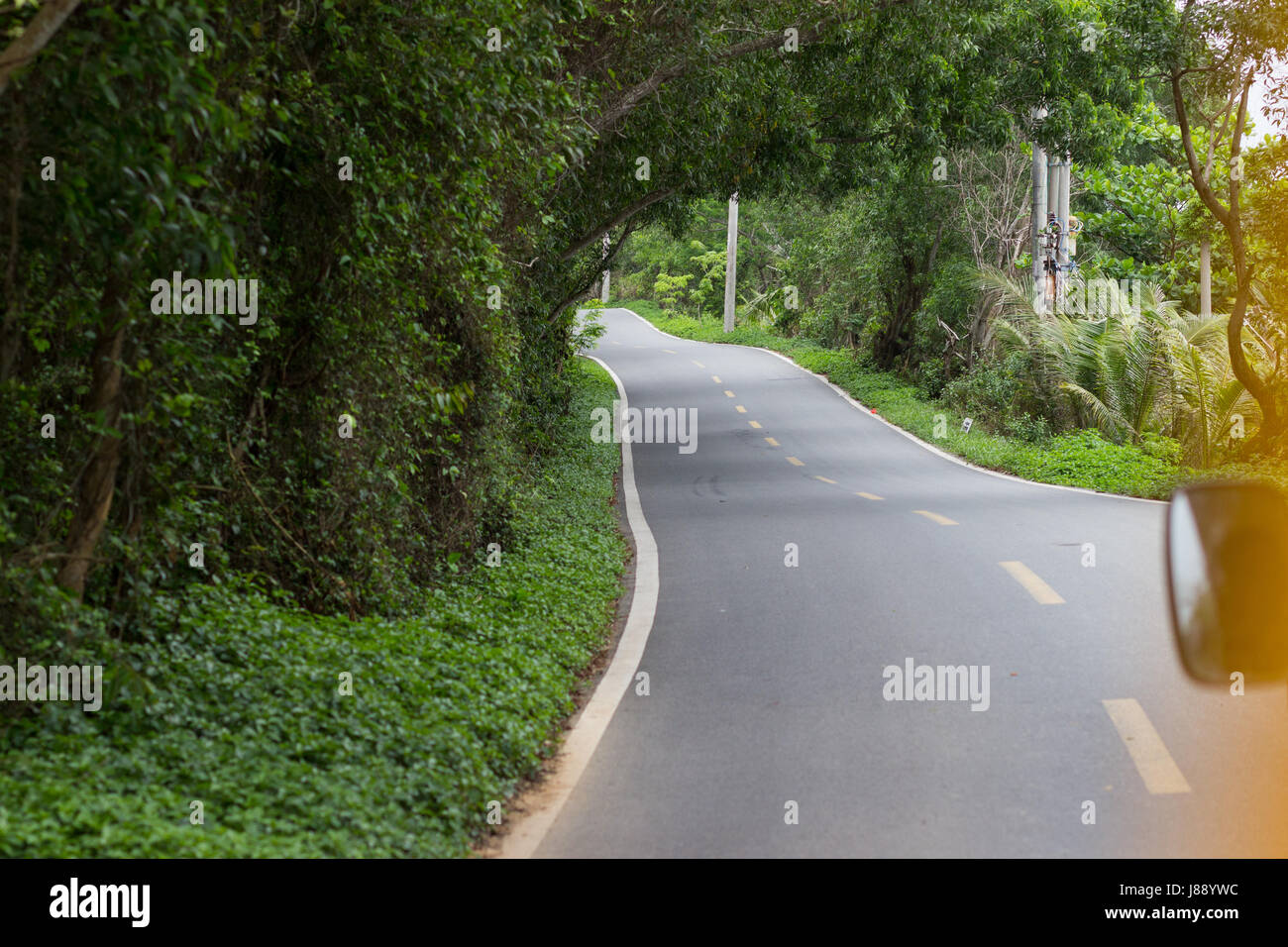An asphalted winding road in a dense tropical forest with gleams through the trees through which sunlight penetrates - Stock Image