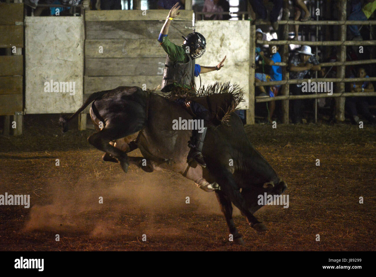 A bull rider balances himself on a bull during the bull festival in Nicoya, Costa Rica. - Stock Image