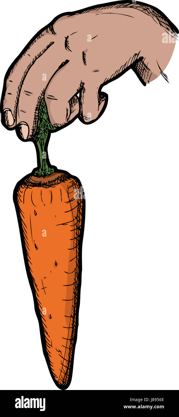 hand, hold, carrot, dangle, payola, bribe, hand, isolated, model, design, - Stock Image