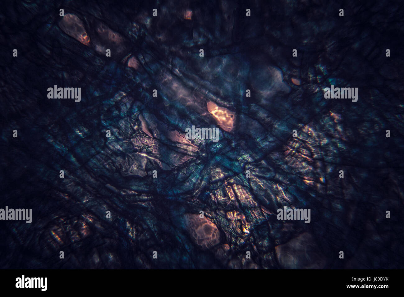 Dark microscopic organic section, texture, background. - Stock Image