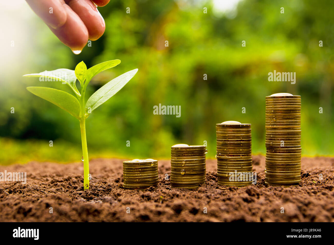 Female hand watering young plant with stack coin for growing business - Stock Image