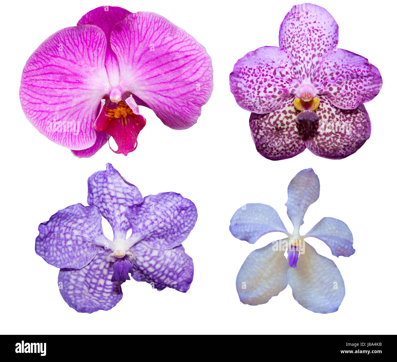 Tropical Orchid Flower Varieties Color And Kind Isolated On White