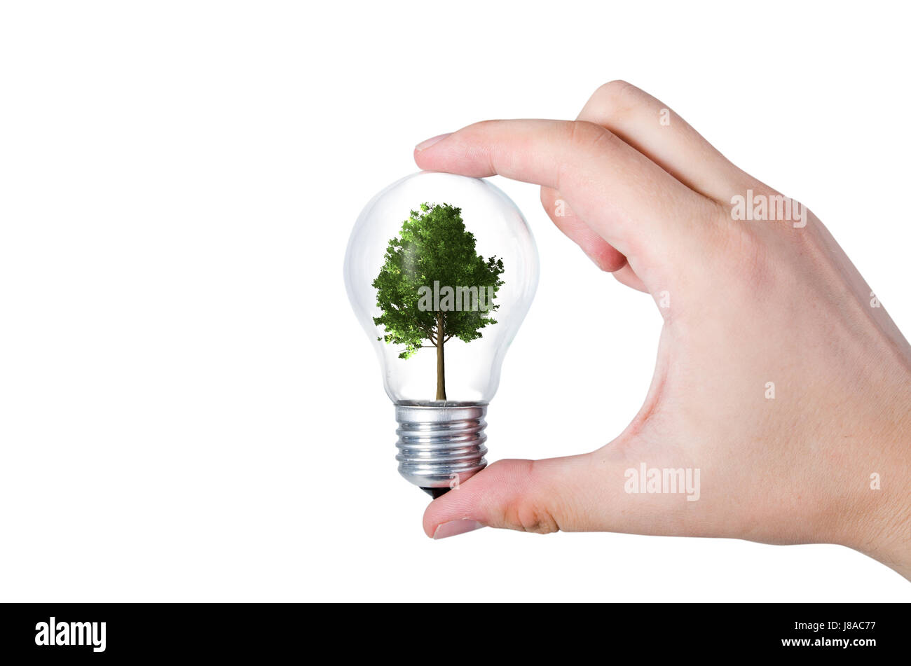Energy efficiency concept. Abstract composition with tree in bulb on white background - Stock Image