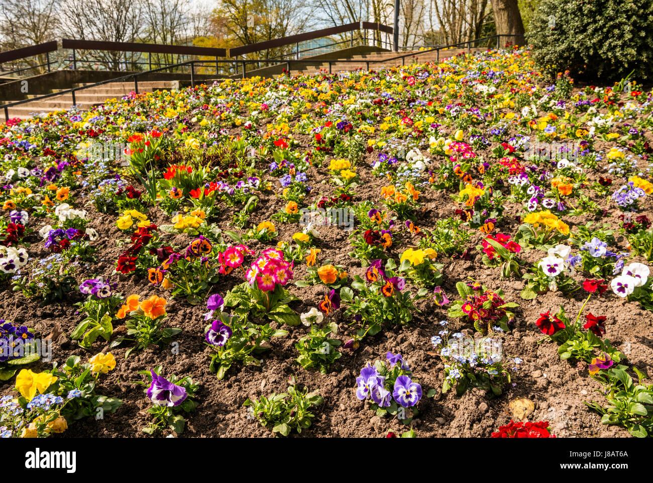 Flowerbed With Colorful Spring Flowers Planten Un Blomen Hamburg