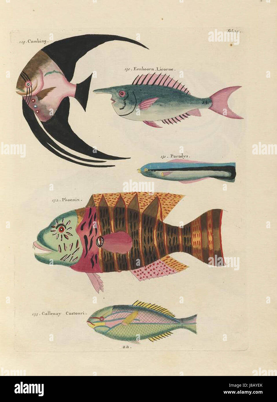 Images from the First Colour Publication on Fish (1754) - Stock Image