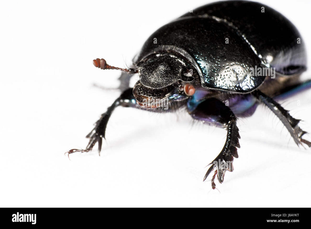 black bug in upper left corner - Stock Image