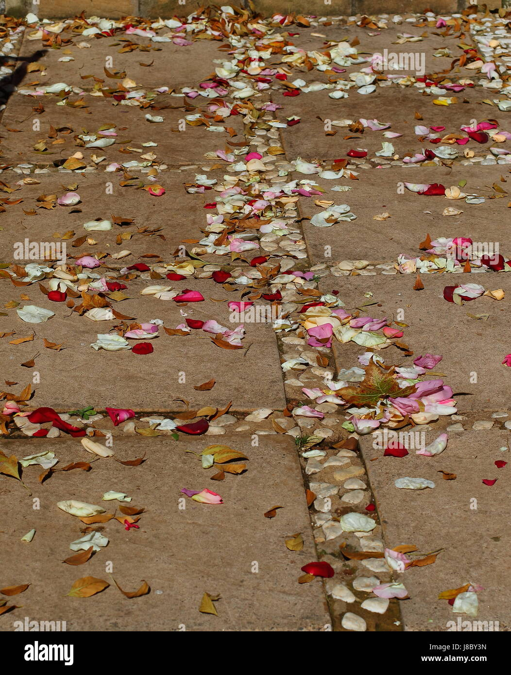 Colorful rose petals scattered on steps an a paved walkway Stock Photo