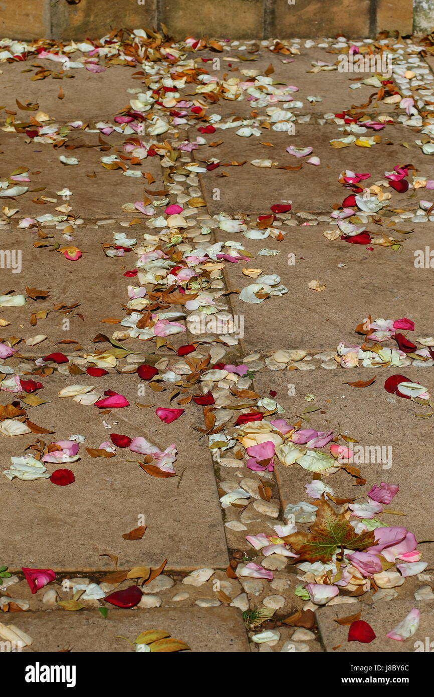 Colorful rose petals scattered on steps an a paved walkway - Stock Image