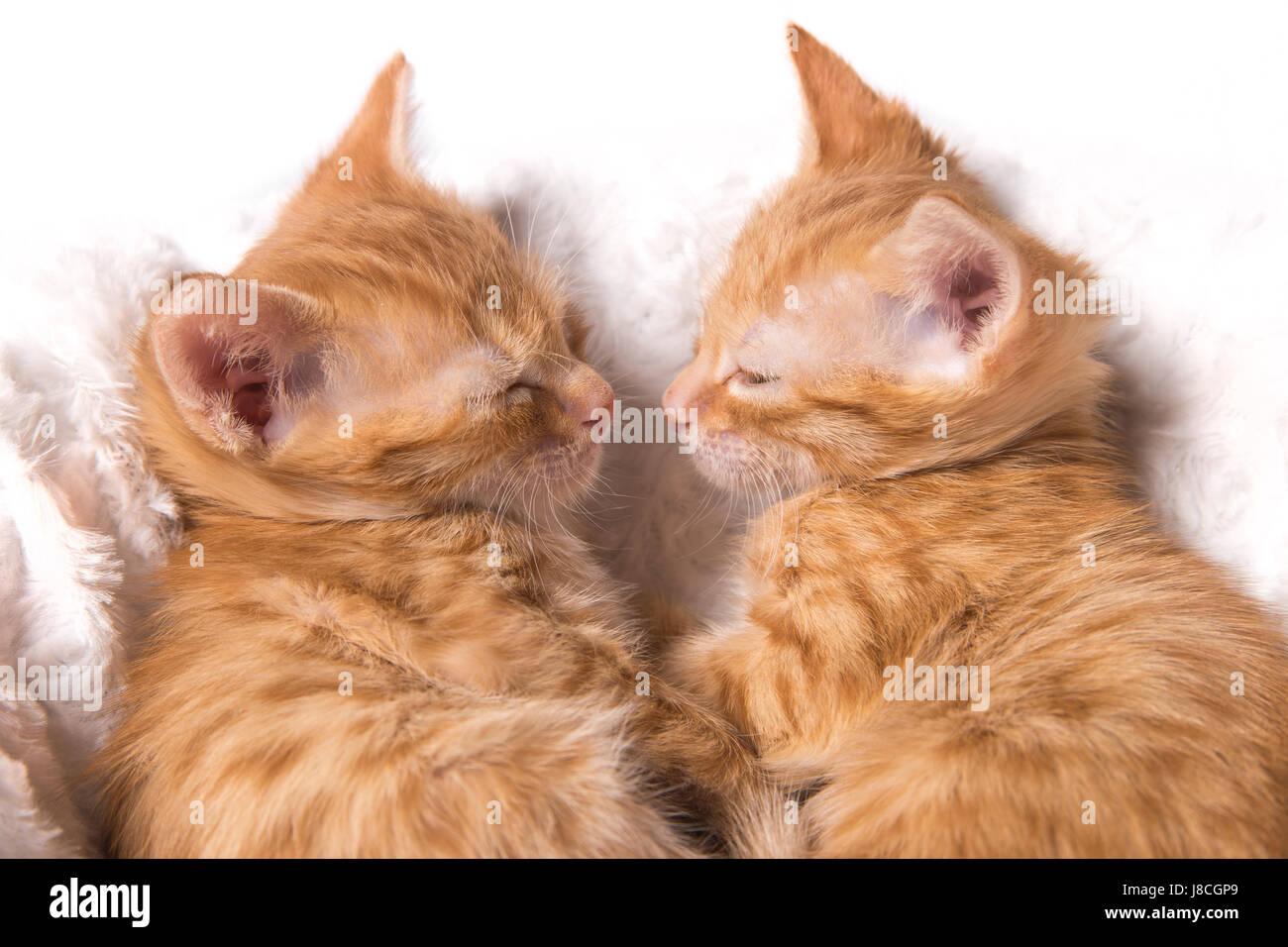 Kittens - Stock Image
