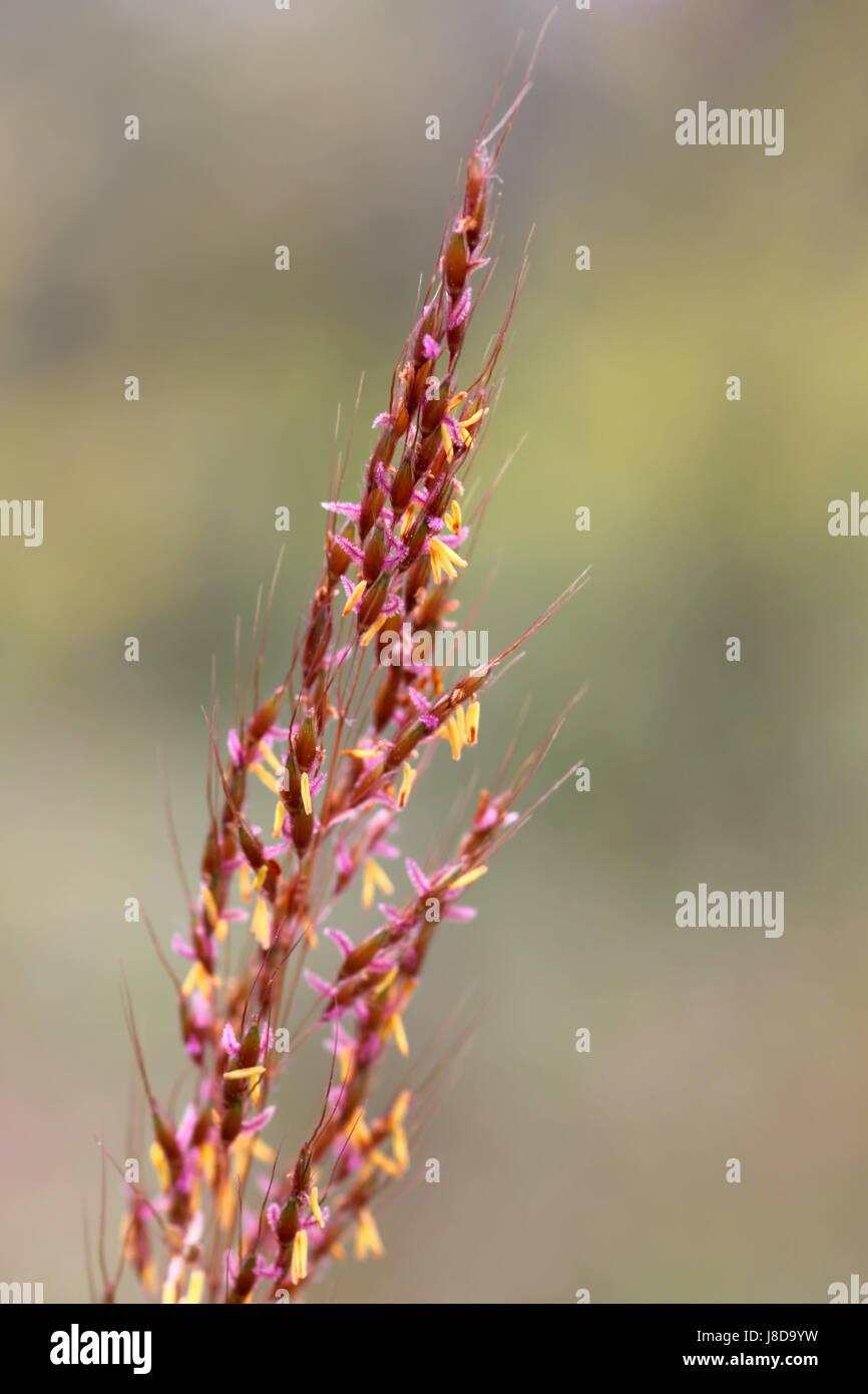 bloom, blossom, flourish, flourishing, meadow, grass, lawn, green, bloom, Stock Photo