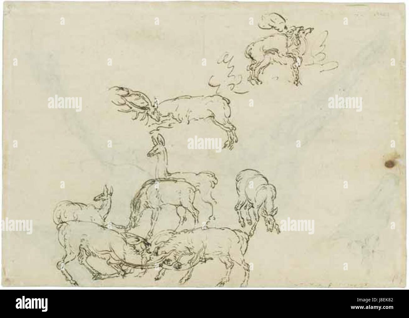 Lucas Cranach deer study drawing - Stock Image