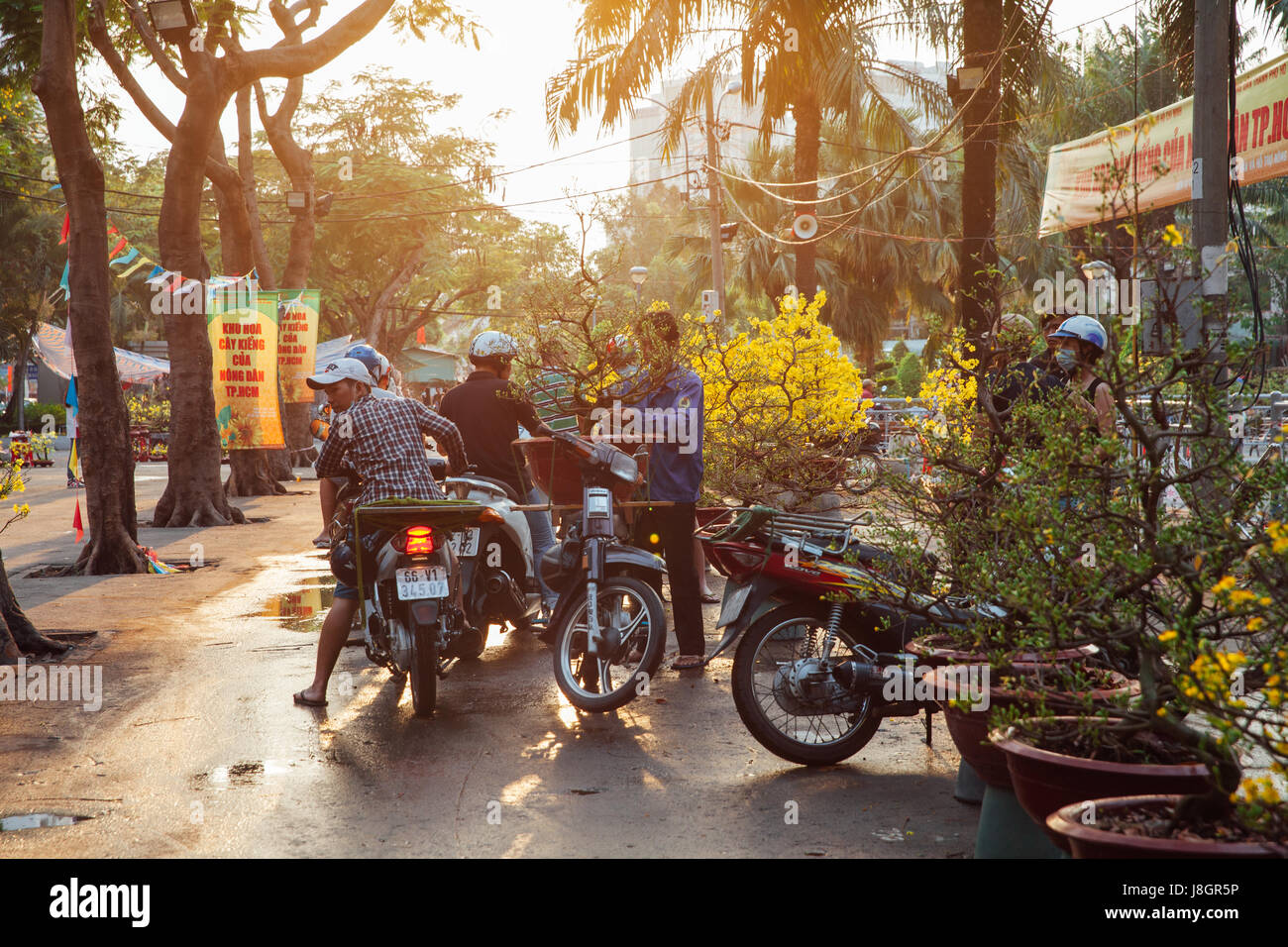 Ho Chi Minh City, Vietnam - February 06, 2016: People buiying holiday trees at the street market during Tet or Lunar - Stock Image
