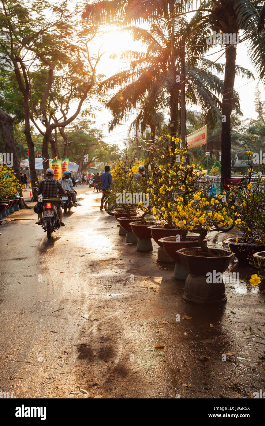 Ho Chi Minh City, Vietnam - February 06, 2016: Holiday trees at the street market during Tet or Lunar New Year celebrations - Stock Image