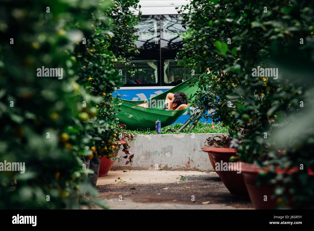 Ho Chi Minh City, Vietnam - February 06, 2016: Holiday trees vendor rests at the street market during Tet or Lunar - Stock Image
